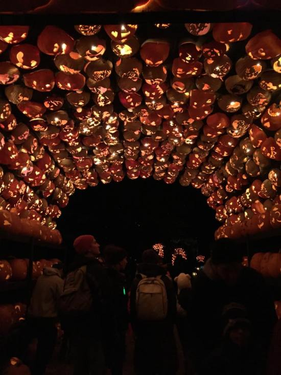 pumpkin tunnel